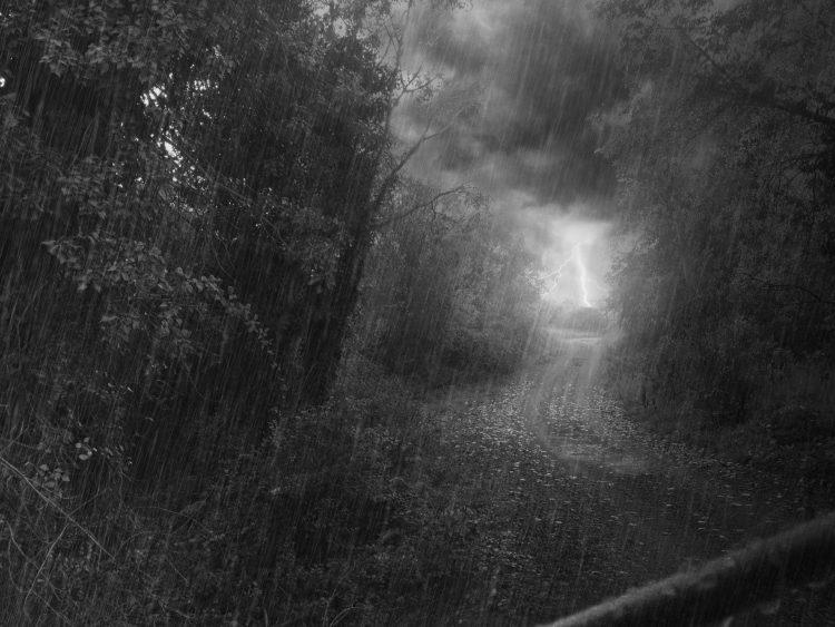 bosque-lluvia