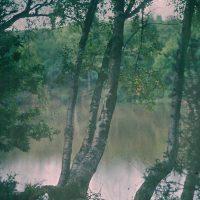 "Photo by John Cimin Walburg: 1909 ""Birch trees on a river bank."""